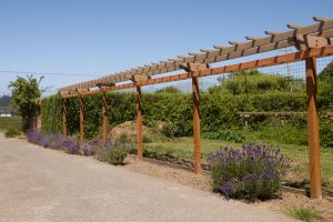 Old arbor top moved to veggie garden
