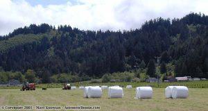 Giant Marshmellows