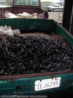 Capetown Mussel Feed