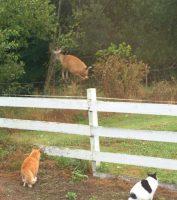 Galen & Ricky deer hunting