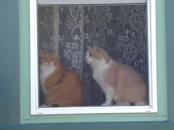 Fred & Ricky