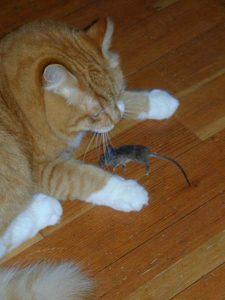 Ricky's mouse