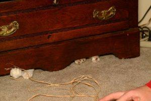 Galen hiding