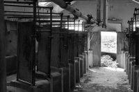 Loleta Milking Barn