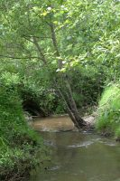 Williams Creek
