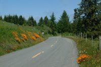 Mattole Road