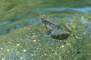 Frog camoflauge