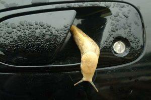 Stupid Slug