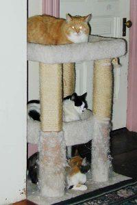 Ricky, Galen, Meg