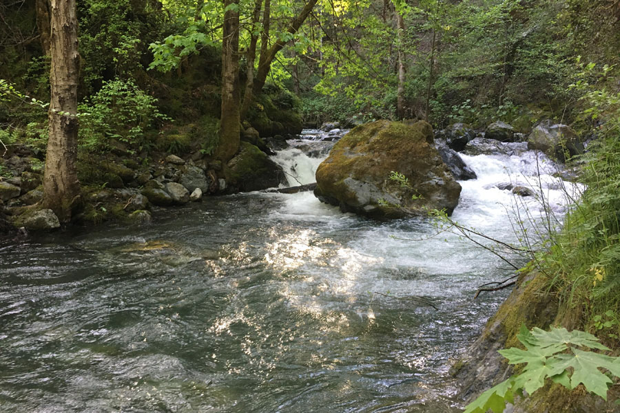 Old Campbell Creek