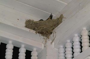 Bird nest on porch
