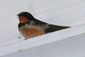 Bird on our porch