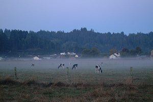 Foggy Ferndale Morning