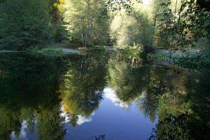 Matt's Pond