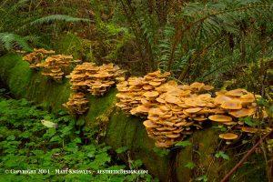 Russ Park Mushrooms