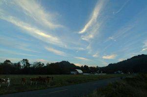 Ferndale Sky
