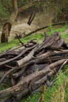 Creek Debris