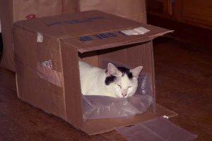 Artie in box