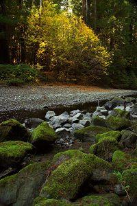 Bull Creek Forest
