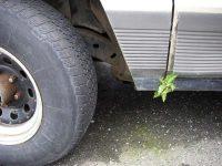 Fern growing on truck