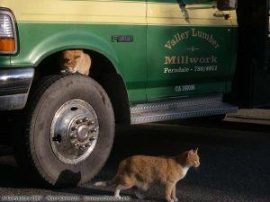Valley Lumber Kitties
