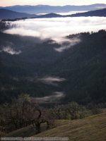 Kneeland Fog