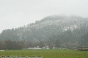 Snowing in the Wildcat