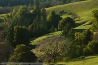 Rolling hills in Humboldt County