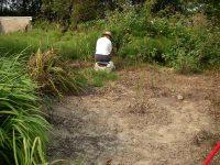 Weeding horsetails
