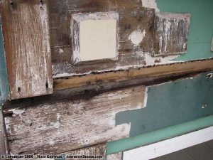 Stripping paint